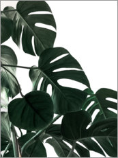 Premium poster  In the shadow of the Monstera - Emanuela Carratoni