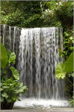 Wall sticker  Waterfall in the orchid garden - Cindy Miller Hopkins