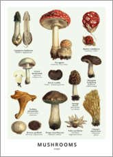 Premium poster  Mushrooms - Wunderkammer Collection