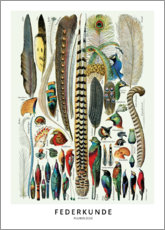 Premium poster  Feathers (German) - Wunderkammer Collection