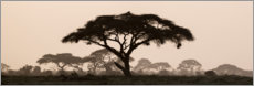 Premium poster Silhouette of a thorny cazie