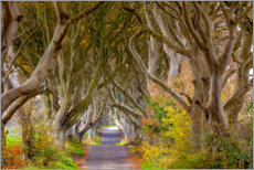 Canvas print  The dark hedges in County Antrim - Chuck Haney