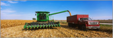 Canvas print  Combine harvests corn on a truck