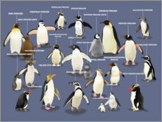 Canvas print  Penguin species - Marc Pattenden