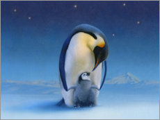 Canvas print  Penguins at night - Simon Mendez