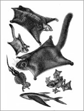 Canvas print  Parachute Animals - Wunderkammer Collection