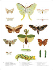 Premium poster  Color splendor of insects II - Wunderkammer Collection