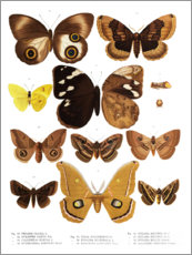 Premium poster  Colourfulness of insects V - Wunderkammer Collection