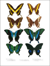 Premium poster  Colourfulness of insects VI - Wunderkammer Collection