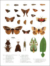 Premium poster  Colourfulness of insects VII - Wunderkammer Collection