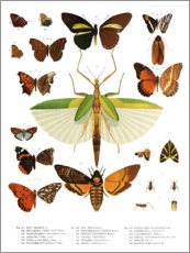 Premium poster  Color splendor of insects IIX - Wunderkammer Collection
