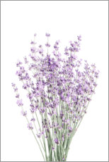Canvas print  Fragrant lavender - Sisi And Seb