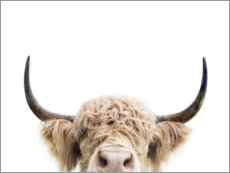 Premium poster  Cuddly Highland Cattle - Sisi And Seb