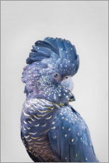 Canvas print  Blue parrot - Sisi And Seb