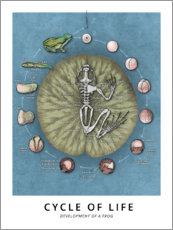 Canvas print  Cycle of life - Wunderkammer Collection
