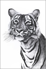 Foam board print  Tiger portrait - Rose Corcoran