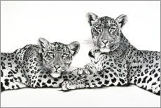 Acrylic print  Two leopards - Rose Corcoran