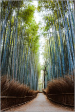 Acrylic print  Bamboo forest in Kyoto - Matteo Colombo