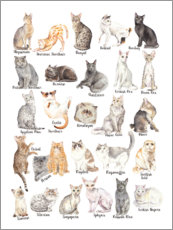 Canvas print  Cat Breeds - Wandering Laur