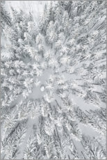 Premium poster Snowy FORESTS