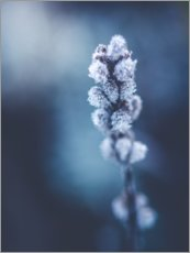 Acrylic print  Pussy Willow - Lena Steiner