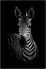 Canvas print  Portrait of a zebra - WildPhotoArt