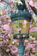 Canvas print  Lantern with cherry blossoms in Paris - Carina Okula