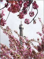 Acrylic print  Eiffel Tower top and cherry blossoms - Carina Okula