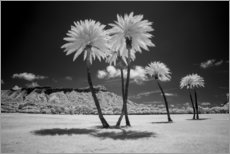 Canvas print  Infrared palm trees - Peter Hawkins
