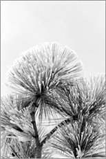 Acrylic print  Pine branch with frost crystals - Adam Jones