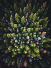 Aluminium print  Colourful conifers from above - Lukas Saalfrank