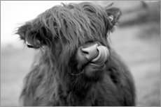 Canvas print  Highland Cattle (Black and White) - John Short