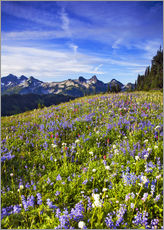 Wall sticker  Flower meadow in front of Mount Rainier - Chuck Haney