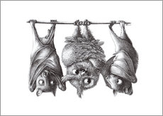 Gallery print  Vampire - Owl and Two Bats - Stefan Kahlhammer