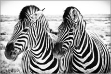 Gallery print  Two Zebras - Jan Schuler