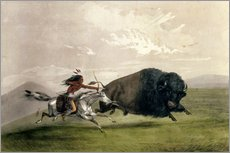 Wall sticker  The Buffalo Chase 'Singling Out' - George Catlin