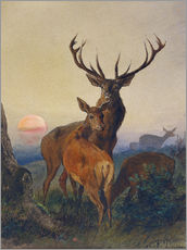 Wall sticker  A Stag with Deer at Sunset - Charles Jones