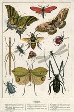 Wall sticker  Insects - English School