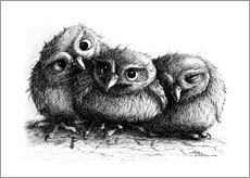 Wall sticker  Three young owls - owlets - Stefan Kahlhammer