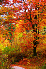 Gallery print  Autumn - Falko Follert