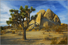 Wall sticker  Joshua tree in rocky desert - Charles Gurche