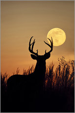 Wall sticker  Whitetail Deer with full moon - Larry Ditto