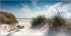 Gallery print  Dune with fine beach grass and seagull, Sylt - Reiner Würz