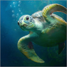 Gallery print  Bubbles, the cute sea turtle - Photoplace Creative
