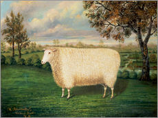 Gallery print  Award winning sheep from the old Lincoln breed, 1835 - W. Adamson