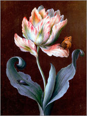 Wall sticker  Parrot tulip with butterfly and beetle - Barbara Regina Dietzsch