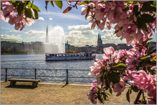 Wall sticker  Cherry on the Alster in Hamburg for Spring - Dennis Stracke