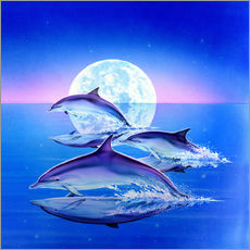 Wall sticker  Dolphin trio - Robin Koni
