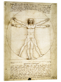 Acrylic print  The Proportions of the human figure - Leonardo da Vinci