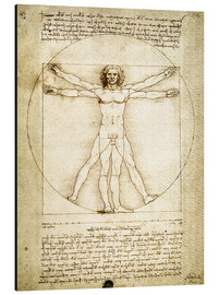 Aluminium print  The Proportions of the human figure - Leonardo da Vinci